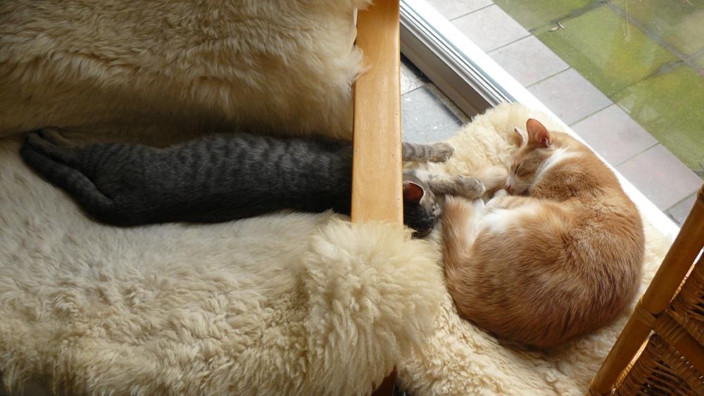 Caramel & Grizou 13.01.13 - 14.06h