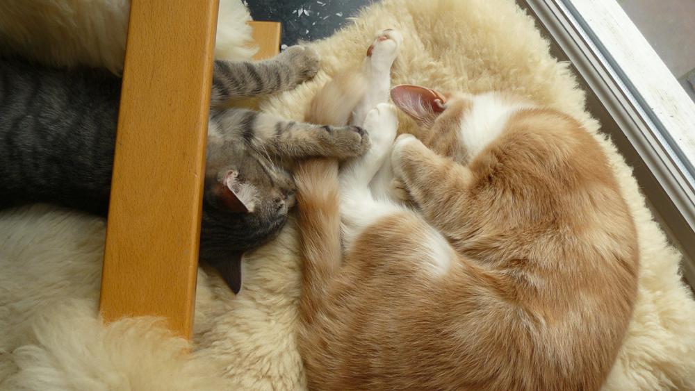 Caramel & Grizou 13.01.13 - 14.07h