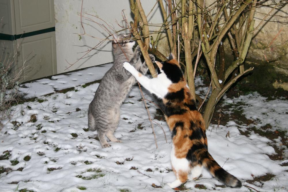 Grizou & Minie  11.02.13 - 17.19h