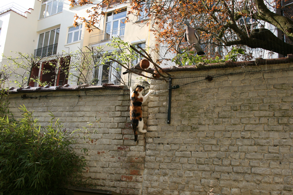 7-Minie & les pigeons 23.04.13 - 17.52h