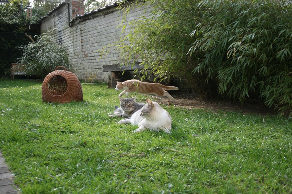 8-Mamour Grizou & Caramel 23.04.13 - 17.53h