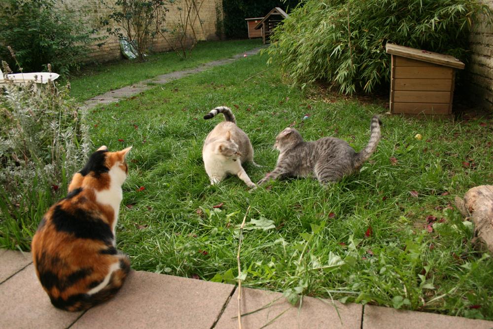 1- Minie, Mamour & Grizou 29.09.13 - 14.28h