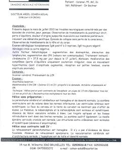 Protocole du scanner  cérébrale de Caramel - 23.10.13 -1